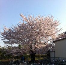 SABUの店長ブログ-sakura