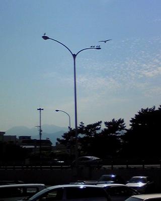 へっぽこな日々-kamome003