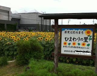 へっぽこな日々-himawari001