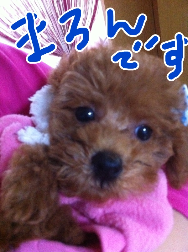 fc2blog_2012101423135804d.jpg