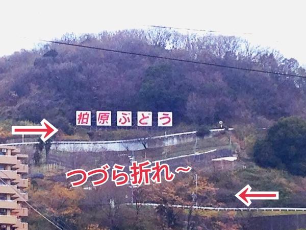 2014S8.jpg