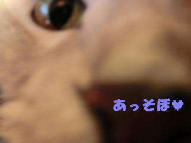 086_convert_20120105090849.jpg