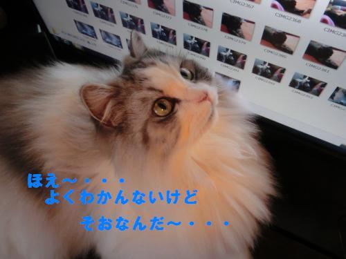 2_20120225231527.jpg