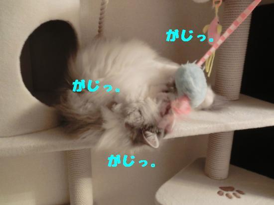 2_20120316024619.jpg