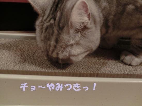 2_20120417080625.jpg