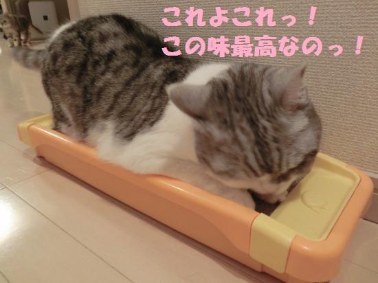 3_20120417080624.jpg