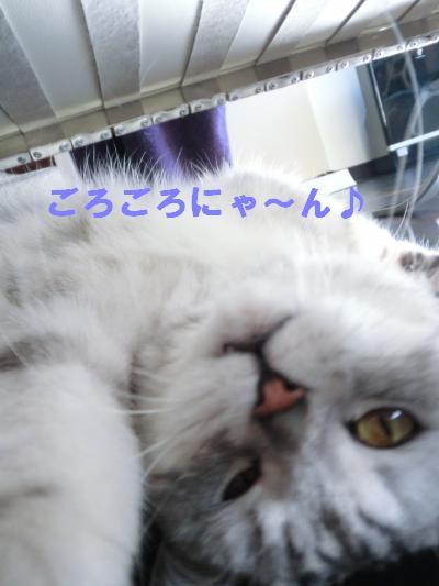 495_convert_20120114070215.jpg