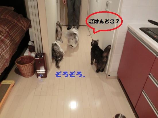 4_20120317081747.jpg