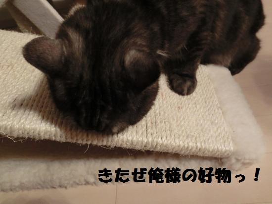 4_20120417080623.jpg