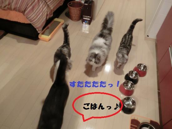 5_20120317081747.jpg