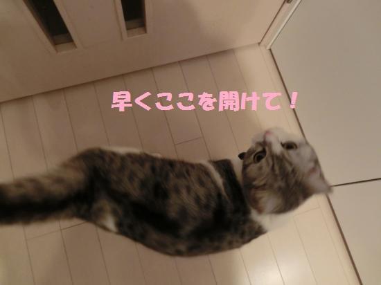 5_20120409073631.jpg