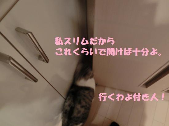 7_20120409073714.jpg