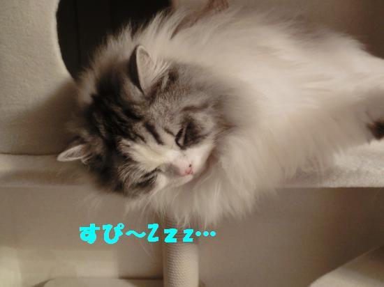 8_20120316024638.jpg