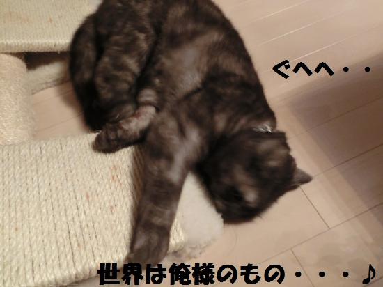 8_20120417080647.jpg