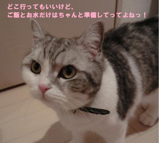 CIMG4381.jpg