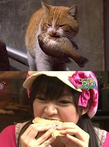 mimorincats.jpg