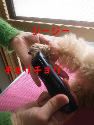 DSC_4465.jpg