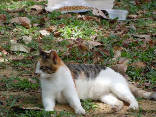 Sin_Cat2.jpg