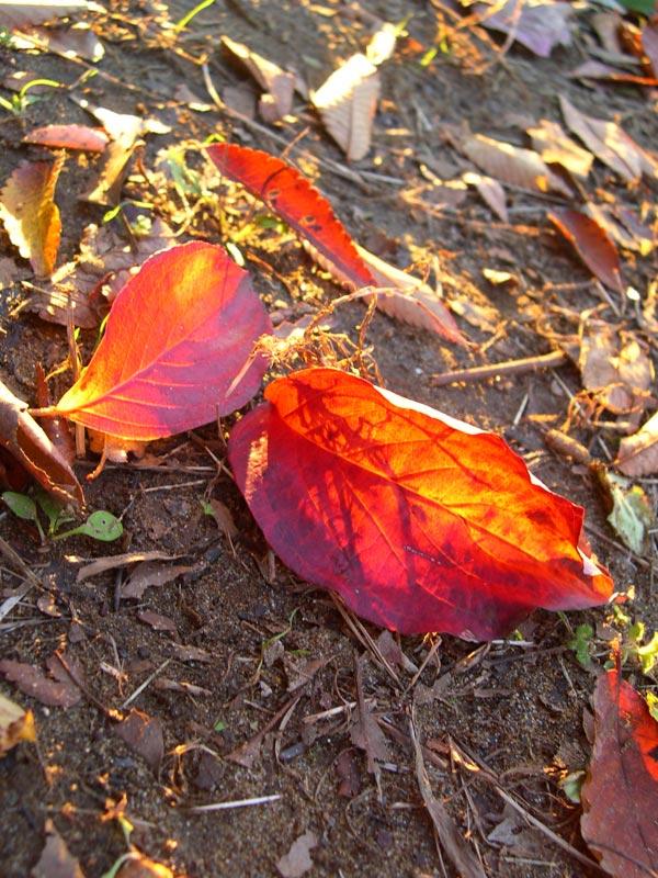 葉の向こう
