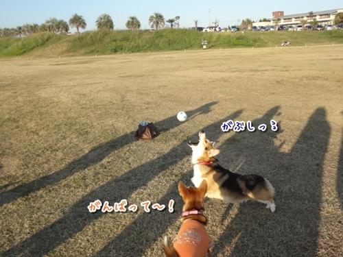 10_20121022145532.jpg