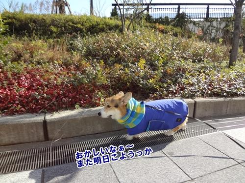 10_20121206182219.jpg