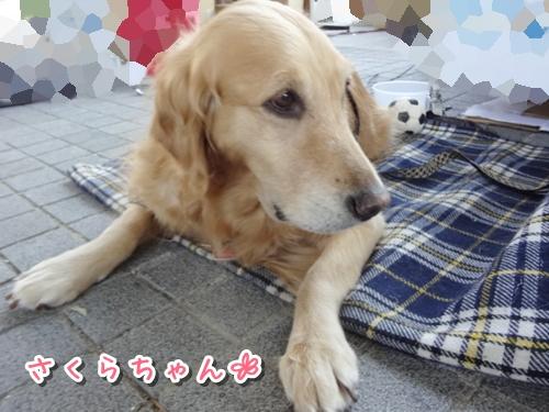 18_20121022230108.jpg