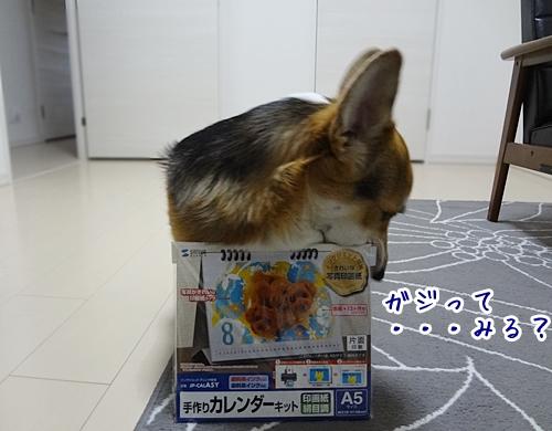 1_20121109172746.jpg