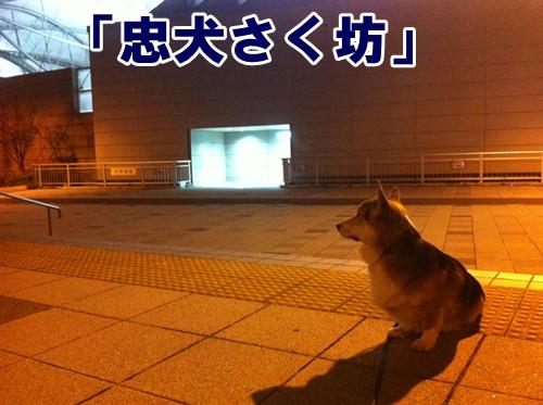 1_20121116184016.jpg