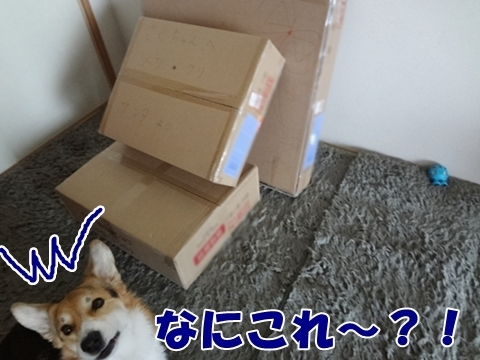 1_20121213185105.jpg