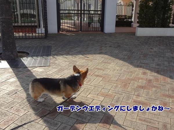 2_20130110193924.jpg