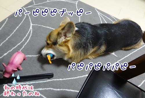 3_20121109173155.jpg