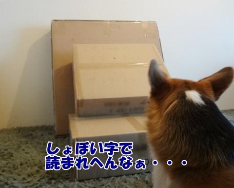3_20121213185108.jpg