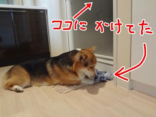 4_20121113163630.jpg