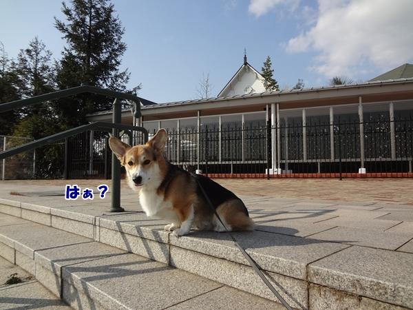 4_20130110193926.jpg