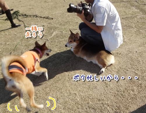 5_20121022144844.jpg
