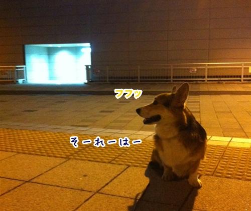 5_20121116184353.jpg