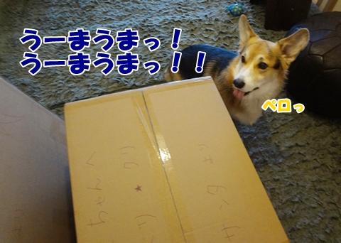 5_20121213185110.jpg
