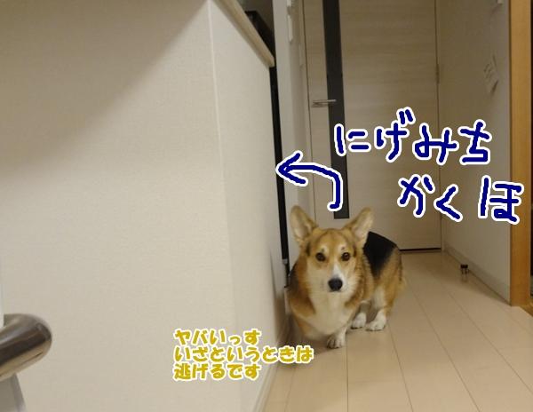 5_20130109191001.jpg