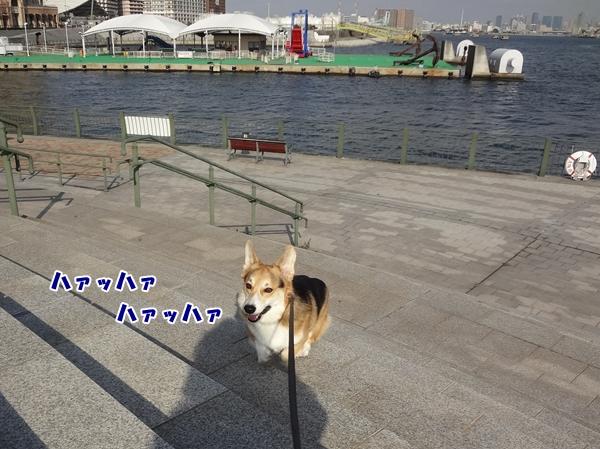 5_20130110193927.jpg