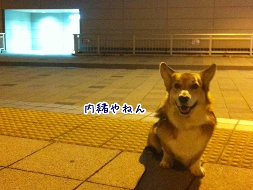 6_20121116184556.jpg