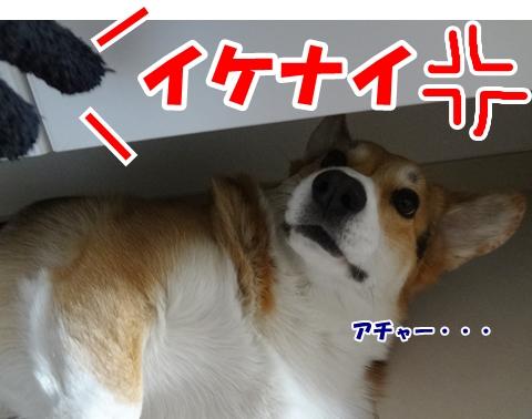 6_20121221185846.jpg