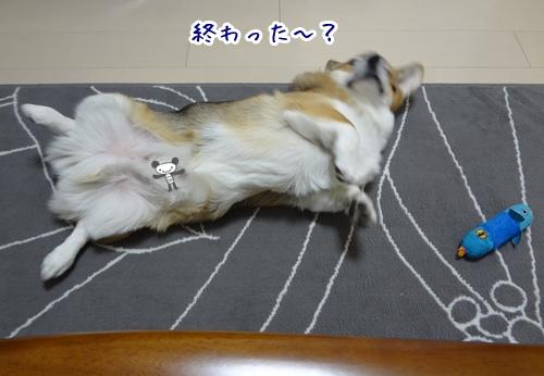 7_20121109174115.jpg
