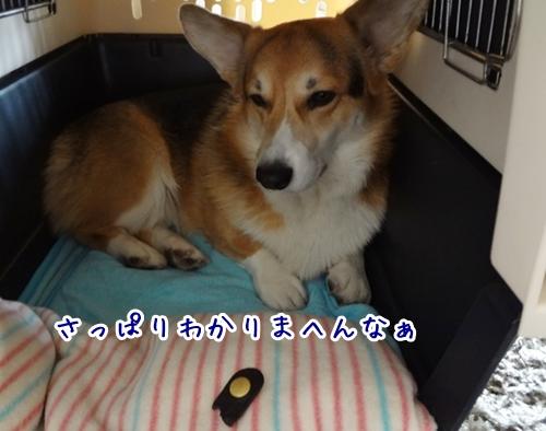 7_20121113164105.jpg