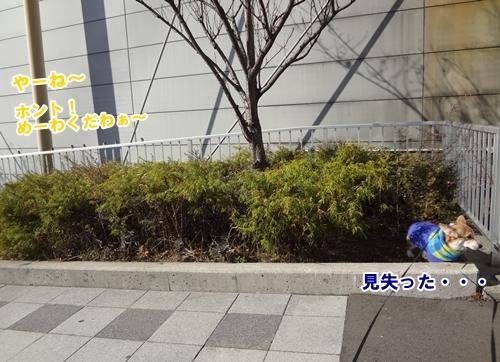 7_20121206182216.jpg
