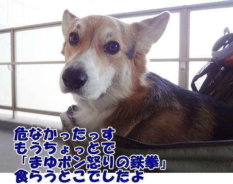 7_20121221185847.jpg
