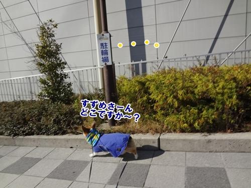 8_20121206182217.jpg