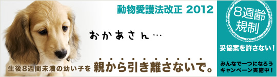 8syu_c_main_L.jpg