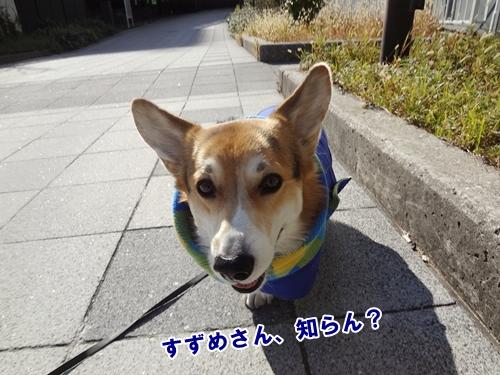 9_20121206182218.jpg