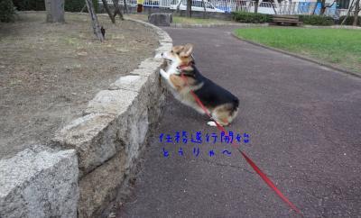 DSC00367_convert_20120716112450.jpg