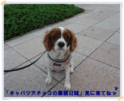 DSC00519_convert_20120717174030.jpg